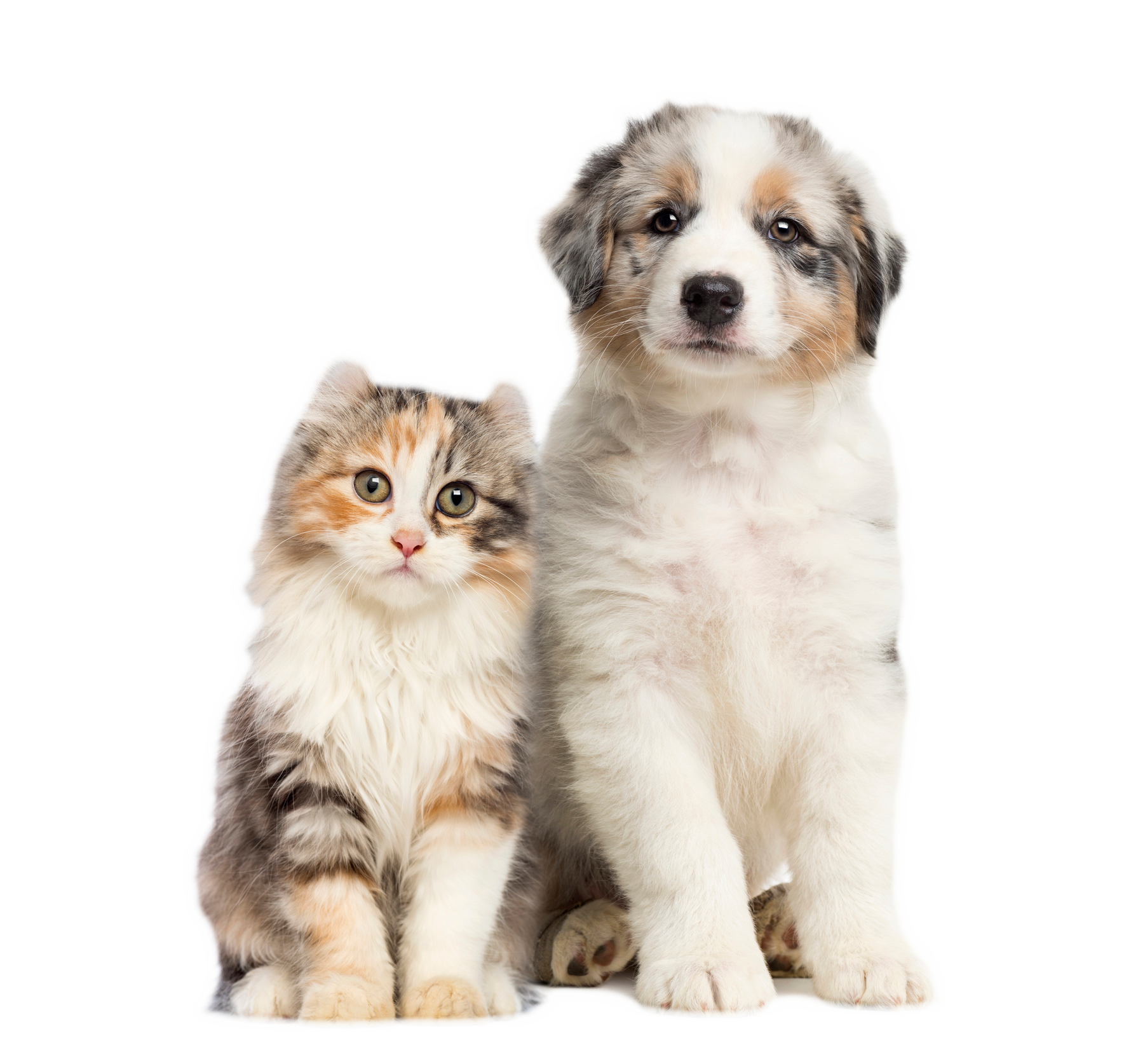 cat-and-dog-blogs